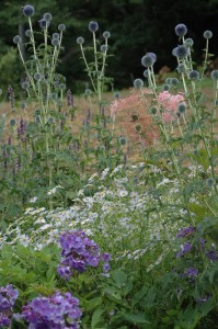 Perennial Meadow Summer-15